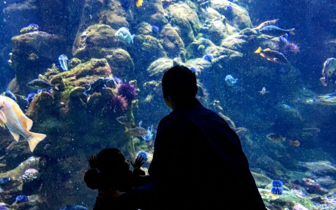 parent and child look at fish in giant aquarium